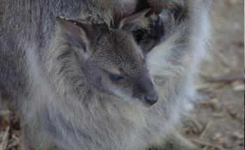 Parc animalier de Saint-Clar